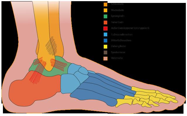 Fußschmerzen: Symptome, Vorbeugung und Behandlung