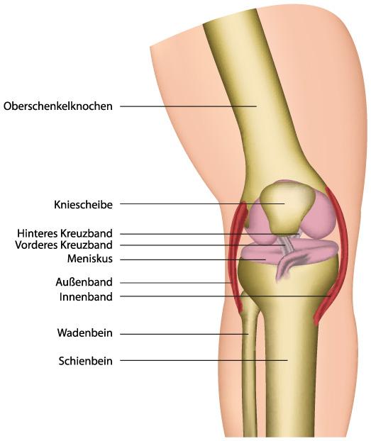 symptome gonarthrose