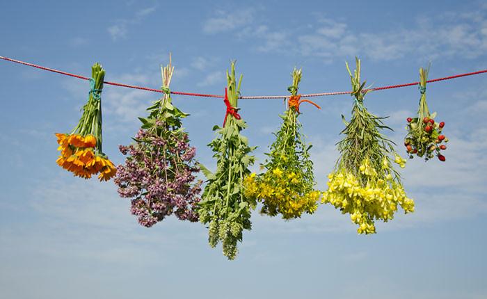 Die wichtigsten Heilpflanzen und ihre Anwendungsgebiete