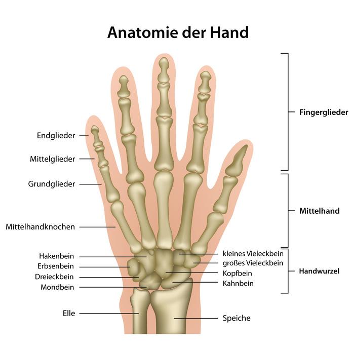 Anatomie der Hand