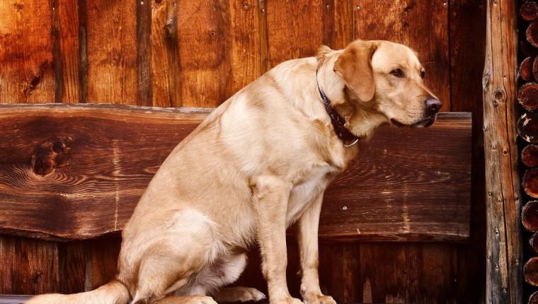 Therapietiere: Wie können Tiere bei Schmerzen helfen?