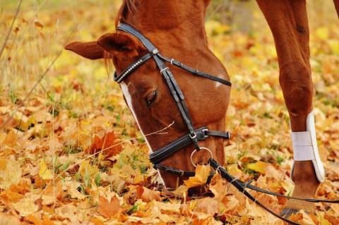Bei der Hippotherapie hilft das Pferd vor allem Schmerzpatienten dadurch, dass auf dem Pferderücken eine erweitere Krankengymnastik möglich ist.